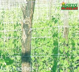 HORTOMALLAS permite la intensificación de los cultivos, especialmente en el caso de pepino u otras cucurbitáceas