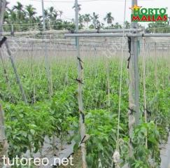 La malla espaldera HORTOMALLAS es lo recomendable para incrementar la densidad de cultivos y disminuir la incidencia de patógenos
