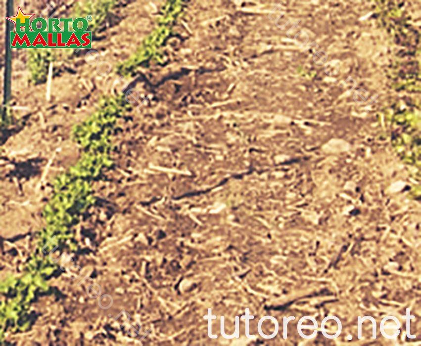 Con el uso de malla espaldera evitará que sus cultivos queden expuestos a la humedad del suelo
