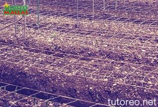La malla para entutorar actúa como un espaldera donde la planta pueda crecer uniformemente y conseguir mejor aireación y exposición solar.