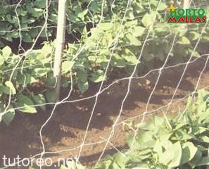 Una buena malla espaldera permite ser re-utilizada varias veces, alternando cultivos conforme las condiciones fitosanitaria del campo lo permita