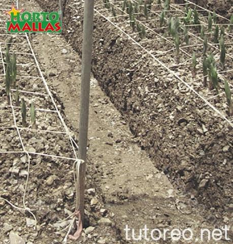 La malla espaldera HORTOMALLAS mejora y facilita la poda y el corte de los cultivos