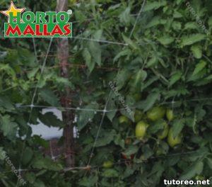 Malla tutora y planta de hortalizas